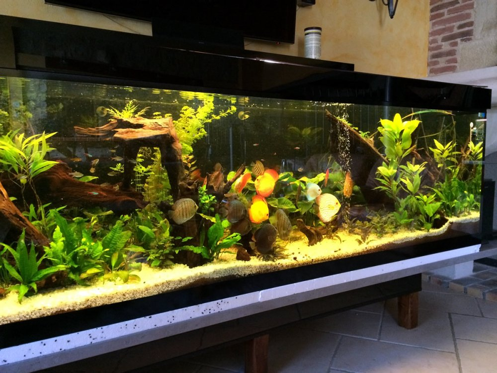 Aquariums et aquariums sur mesure original reflet for Eau douce aquarium
